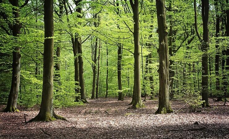 Fokus på risici forpurrer klimagevinster ved skovbrug