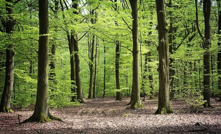IKEA ejer 90.000 hektar skov i Letland
