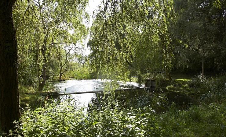 Vestegnskommune drømmer om en halv million nye træer