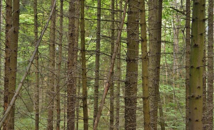 Dansk Skovforening advarer om stop af skovdrift på statens arealer
