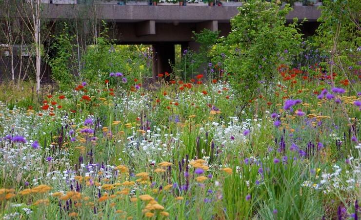 Plante-pionær lærer fra sig på H&L