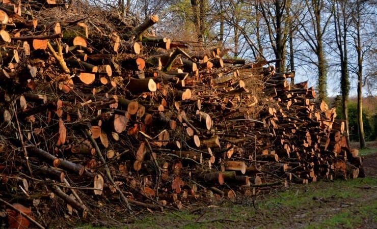 Dansk træ-direktør går en liga op