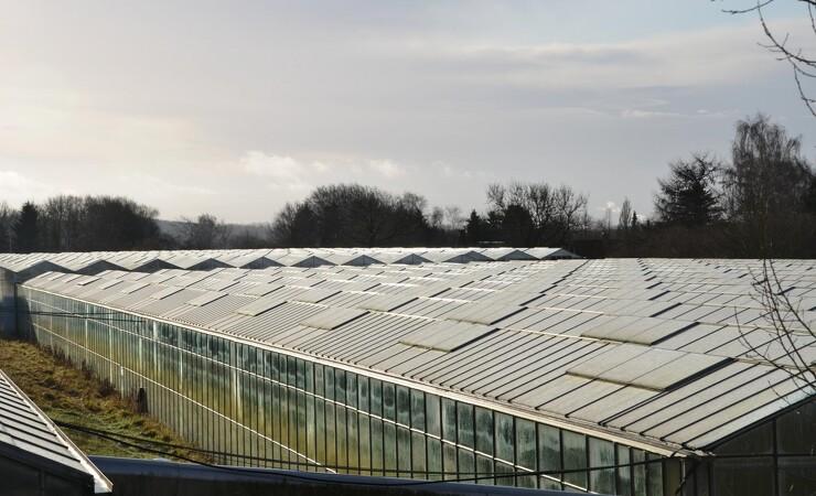 Miljøministeren: Gartneribranchen skal få styr på udslip af ulovlige sprøjtemidler