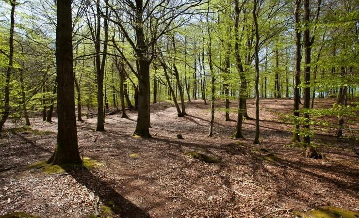 TV2 udvider True skov
