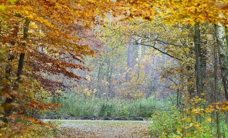 Skovbruget står foran et coronatilsyn