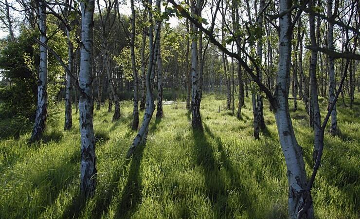 Samsø planter CO2-støvsuger