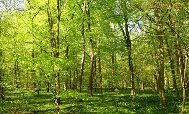 Hedeselskabet lancerer grøn 2025-plan