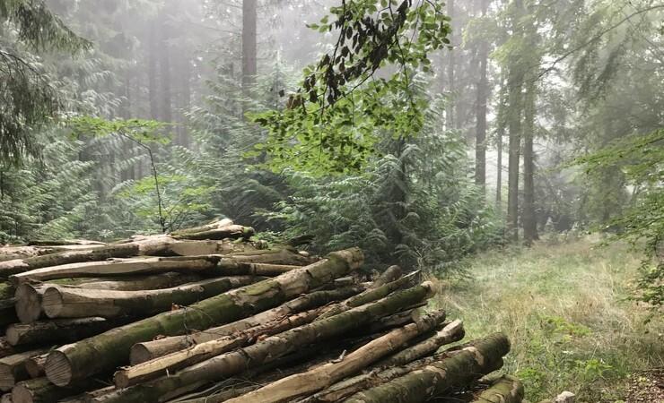 Træ nok i skoven til at stille byggeriets sult