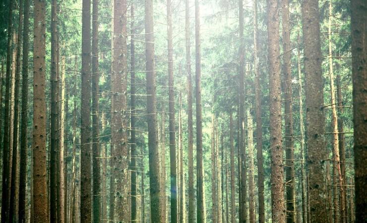 15 millioner kroner til urørt skov og blomstrende enge
