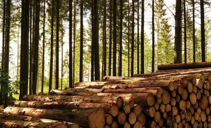 Europas skove vokser hurtigere end hugsten