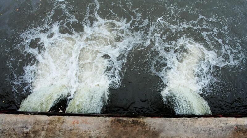 Dårlige østers afslører fejl i kloaknettet
